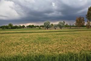 Afghanistan farm
