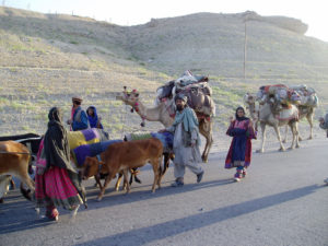 Kuchi migrants