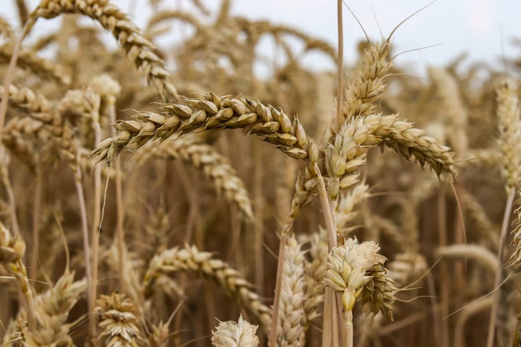 cereals, grains
