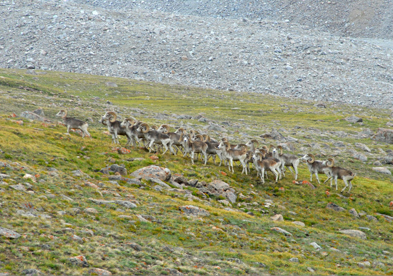 Wakhan National Park